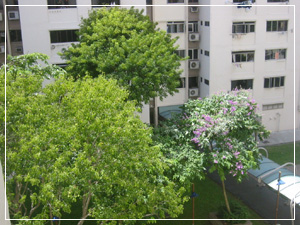 viewfrombedroom20061125as